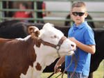 SLIDESHOW: Fair Horse, Cattle, Beef Shows
