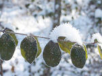 SLIDESHOW: Winter Photos from Readers