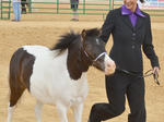 SLIDESHOW: Fair Horse Shows
