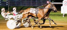 """<div class=""""source"""">Nigel Soult</div><div class=""""image-desc"""">Duel in the Sun noses out Blatantly Best in the $250,000 final on Sept. 9. Blatantly Best was subject of judges' inquiry for bumping Duel repeatedly during the stretch drive. They each </div><div class=""""buy-pic""""></div>"""