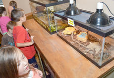 """<div class=""""source"""">Calen McKinney</div><div class=""""image-desc"""">Children take an up close look at a snake on display at the visitor's center.</div><div class=""""buy-pic""""><a href=""""/photo_select/45260"""">Buy this photo</a></div>"""