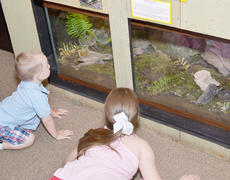 """<div class=""""source"""">Calen McKinney</div><div class=""""image-desc"""">Children get on the floor to take a good look at this display, which features several different species of animals.</div><div class=""""buy-pic""""><a href=""""/photo_select/45263"""">Buy this photo</a></div>"""