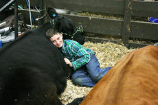 """<div class=""""source""""></div><div class=""""image-desc"""">Blake Woodrum, 12, takes a break in the barn with his Angus heifer after a long day at the North American International Junior Heifer Show. This is Woodrum's first year exhibiting at the NAILE. Blake's parents are Michael and Marsha Woodrum of Campbellsville.</div><div class=""""buy-pic""""></div>"""