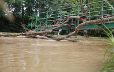 "<div class=""source"">Jeff Moreland</div><div class=""image-desc"">Flash flooding Saturday night left debris in many streams Sunday, including this portion of the creek at Miller Park.</div><div class=""buy-pic""></div>"