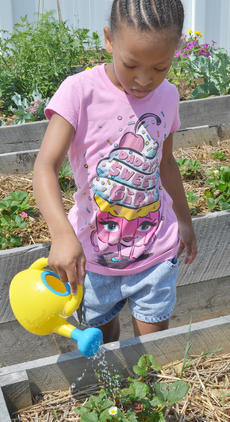 "<div class=""source"">Calen McKinney</div><div class=""image-desc"">Zaria Pinkston, 7, of Campbellsville, waters some strawberry plants.</div><div class=""buy-pic""><a href=""/photo_select/54251"">Buy this photo</a></div>"