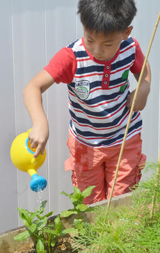 "<div class=""source"">Calen McKinney</div><div class=""image-desc"">Yoon Bin Nam, 7, of Campbellsville, waters one of the garden beds.</div><div class=""buy-pic""><a href=""/photo_select/54241"">Buy this photo</a></div>"