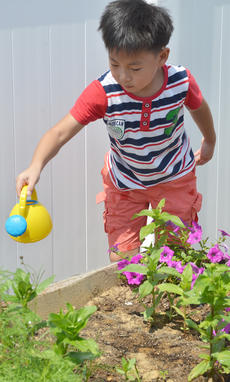 "<div class=""source"">Calen McKinney</div><div class=""image-desc"">Yoon Bin Nam, 7, of Campbellsville, waters one of the garden beds.</div><div class=""buy-pic""><a href=""/photo_select/54242"">Buy this photo</a></div>"