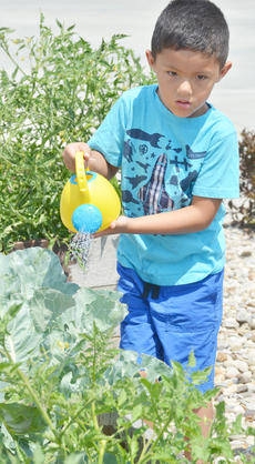 "<div class=""source"">Calen McKinney</div><div class=""image-desc"">Marco Escamilla, 5, waters one of the garden beds. Escamilla lives in Indiana but was in Campbellsville last week visiting family.</div><div class=""buy-pic""><a href=""/photo_select/54247"">Buy this photo</a></div>"