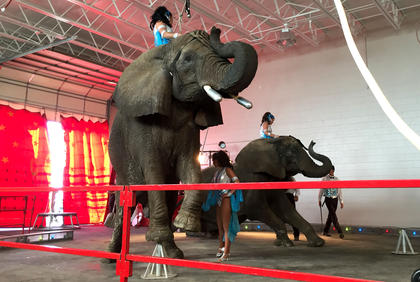 Elephants, lions, horse, trick dogs and camels filled the National Guard Armory Tuesday. Bright lights, music and cotton candy made the experience extra special for all.