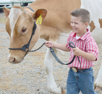 Daniel Carrender of Campbellsville laughs as he walks his cattle to the competition.