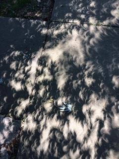 Submitted from the Facebook profile of Miranda Stauffer Eclipse shadows in Elkhorn