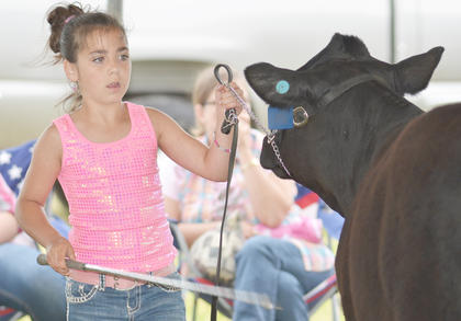 Ashton Johnson grooms her beef cow during the competition.