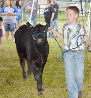 Justin Richerson of Taylor County walks his cow out of the tent after competing.