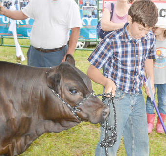 Blake Woodrum leads his cow out of the tent after competing.