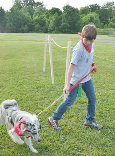 Dalton Nunn walks his dog, Sly, for the judges at the fair's first dog show, sponsored by the Taylor County SPCA.