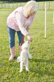Carla Kendall gives her dog, Tiffy, a treat while competing at the fair&#039;s first dog show, sponsored by the Taylor County SPCA.