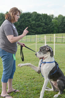 Leslie Vance of Campbellsville participates in the first dog show at the Taylor County Fair, sponsored by the Taylor County SPCA. Her dog, Scooby, a great dane, performs tricks for the judges.