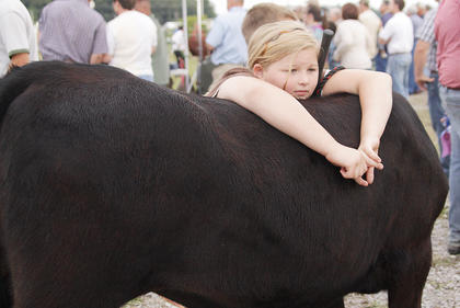Lea Corbin of Campbellsville takes a break on the back of her cow, Baby Girl, before participating in the Open Beef Show on Saturday.