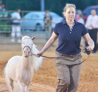 Kirsten Ashby of Greensburg competes in the miniature horse show.