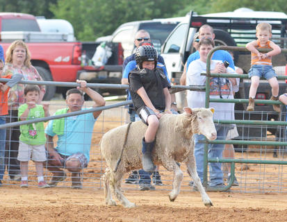 A large crowd gathers to watch the fair's first mutton busting. Almost 20 children competed.