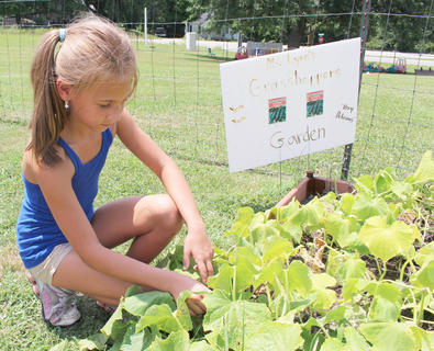 Addison Shipp carefully spreads the leaves in search of a cucumber at A Child's Workplace.