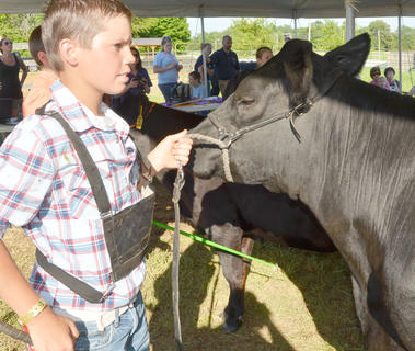 Tanner Johnson stands as he is judged during the fair's beef show.