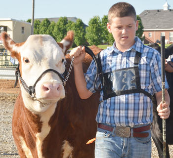 Wesley Burton walks into the ring to participate in the fair's beef show.