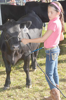 Kaylyn Smith of Campbellsville shows in the fair's beef show.