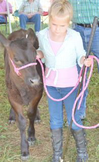 Nearly 40 local youth participated in this year's beef show at the Taylor County Fair.