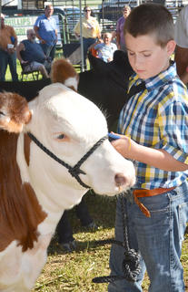 Jake Gray concentrates as he shows during the fair's beef show.