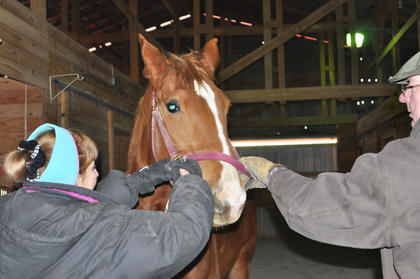 Owners Marnie and Tom Braun adjust the halter on T'Alli, a 9-year-old Irish Warmblood, at the Meadowbrook Equestrian Center on Elk Horn Road. T'Alli was brought to the United States from Ireland in utero and is considered rare because she is the only living relative with her mother's bloodline in the United States.