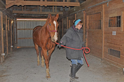 Marnie Braun leads 9-year-old T'Alli, an Irish warmblood, around the barn at the Meadowbrook Equestrian Center.