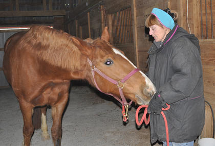 T'Alli, a 9-year-old Irish Warmblood, sniffs owner Marnie Braun's hand for treats at the Meadowbrook Equestrian Center.