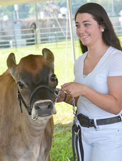 Nearly 140 head of dairy cattle were shown at this year's dairy show at the fair on Saturday. Thirty-five exhibitors participated. Steve Martin was the chair of the show. Taylor County Extension Office employees, in addition to FFA and Taylor County Cattlemen members, helped with the show. Above, Rachel Hinton of Campbellsville smiles as her entry in the dairy show is judged.
