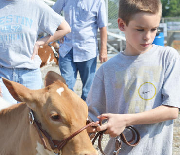 Nearly 140 head of dairy cattle were shown at this year's dairy show at the fair on Saturday. Thirty-five exhibitors participated.