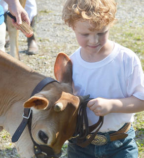 Jace Briggs of Campbellsville walks with his dairy cow to compete in this year's dairy show.