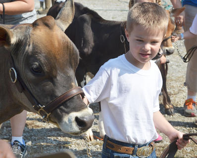 Ben Carrender of Campbellsville walks with his dairy cattle to compete in the competition.