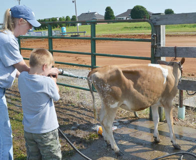 Amber Huffman and her son, Cade, 5, of Center, spray their cow Josie before the start of Saturday's competition.