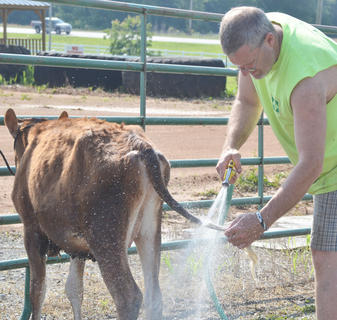 Doug Jones of Barren Co. washes this cow's tale before the start of Saturday's competition.
