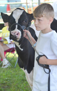 Many youth from surrounding counties participated in the dairy show.
