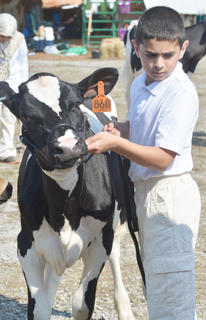 Hassan Alabusalim shows his dairy cow.