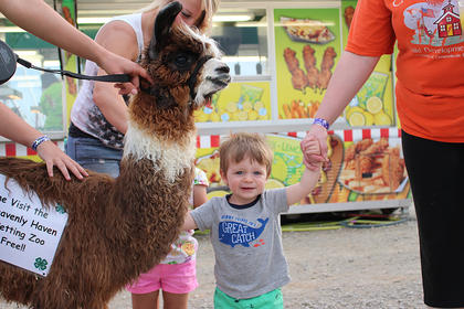 Beckett Shelton holds his mother Julie's hand while petting Sparkles the miniature llama.