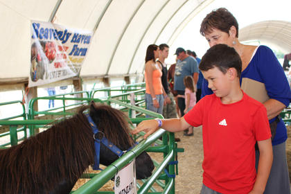 Blayne Gowin pets a miniature horse with his grandmother Sharon Gowin at the Taylor County 4-H and Heavenly Haven Farm petting zoo.