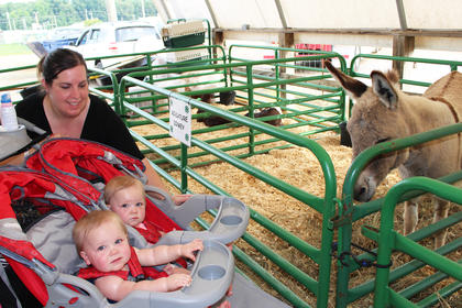 Twins Lily, front, and Eva meet their first miniature donkey as their mother Christina Fischbach takes them through the Taylor County 4-H and Heavenly Haven Farm petting zoo.
