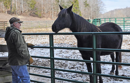 D, a Tennessee Walking Horse, curiously sniffs owner Mike Holzknecht at Stoner Creek Farm.