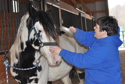 Owner Leisha Holzknecht grooms her stud horse Slim. She said horses grow thick, fuzzy coats to stay warm during the winter but will shed the extra hair in the spring.
