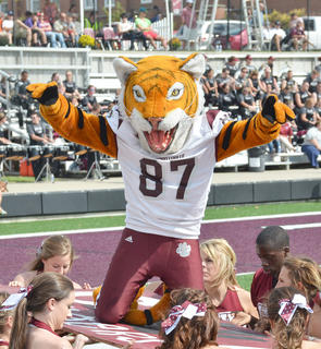 CU's mascot, Clawz, does push-ups after the CU Tiger football team scores a touchdown. CU defeated Kentucky Christian University by a score of 23-6.