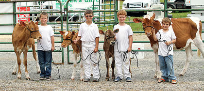 From left, Ben and Daniel Carrender, Jace Briggs and Austin Carrender are ready to show their cows.
