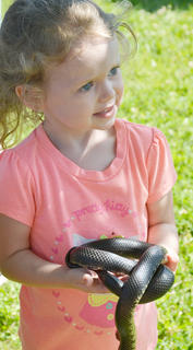 Erie Burton, 3, of Elizabethtown, whose mother, Ashley Knifley Burton, is originally from Campbellsville, touches this snake, which was found near Green River Lake.