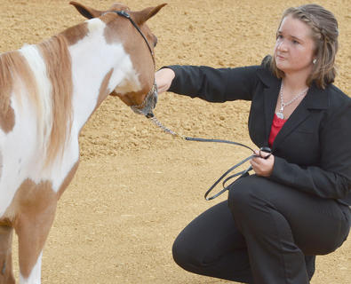 Katelyn Carter of Campbellsville participates in the fair's miniature horse show.